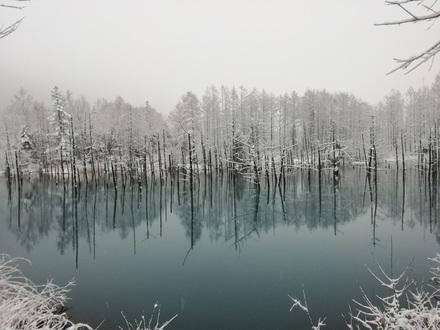 美瑛 青い池 この日は青くなかったけど神秘的